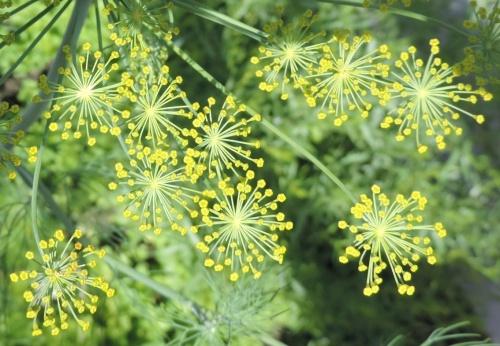 floribundance