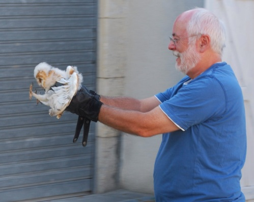 me carrying owlet