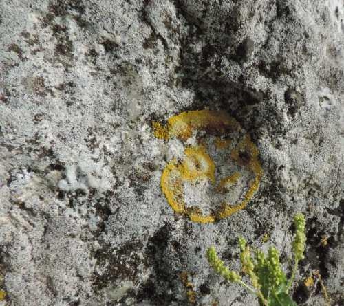 dolmen lichen.jpg