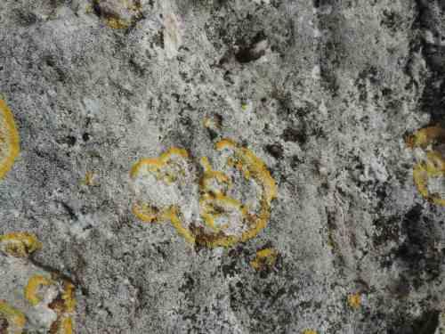 lichen spiral