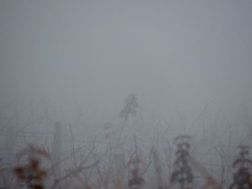 foggy-view