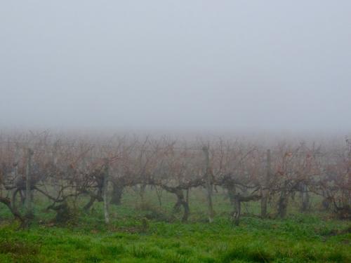 vine-fog