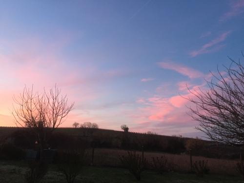 pink dawn1