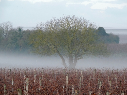tree in misty vines